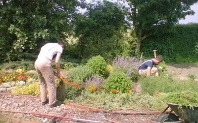 Neue Pflanzung